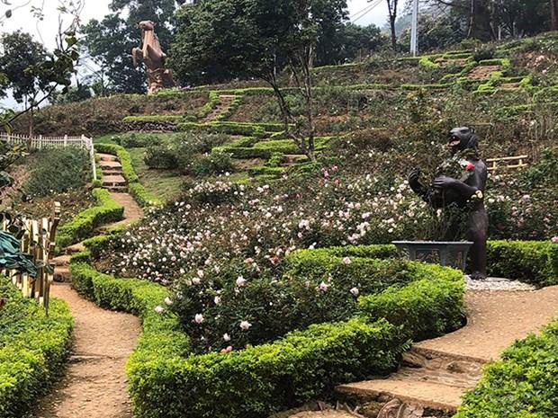 Implanta complejo turistico record del mayor jardin de rosas en Vietnam hinh anh 1