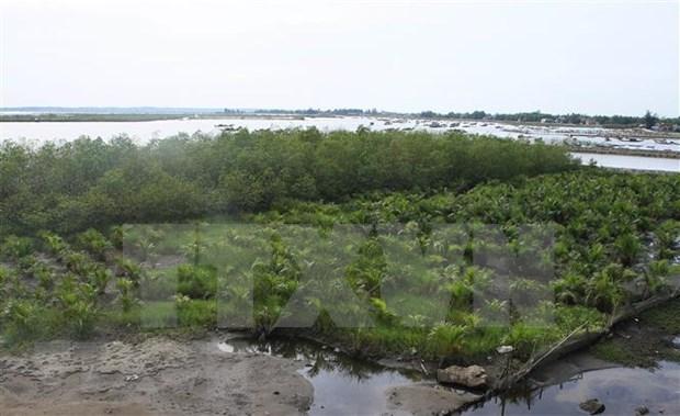Fondo Verde de Naciones Unidas ayuda a Vietnam para enfrentar el cambio climatico hinh anh 1
