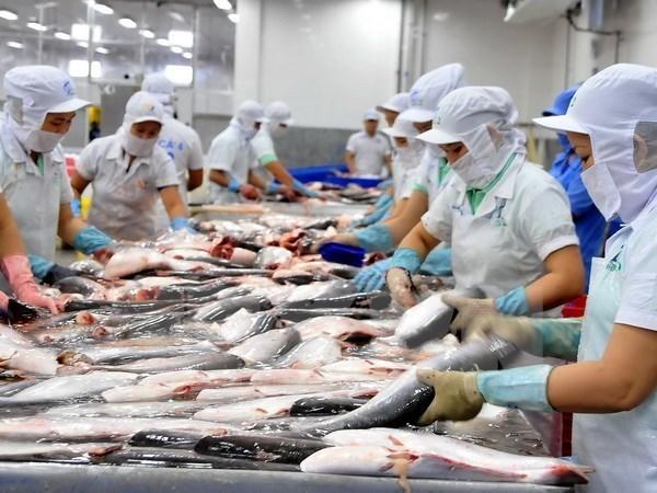 Espera Vietnam aumentar ingresos por exportacion de pescado Tra en primer trimestre de 2019 hinh anh 1