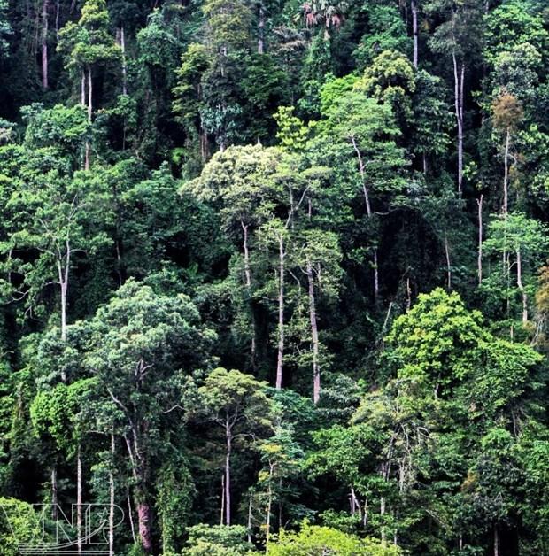 La reserva natural de Pu Luong, destino fascinante para aventureros en Vietnam hinh anh 4