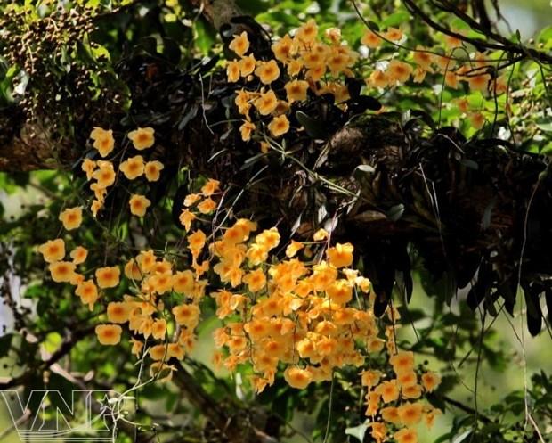 La reserva natural de Pu Luong, destino fascinante para aventureros en Vietnam hinh anh 2
