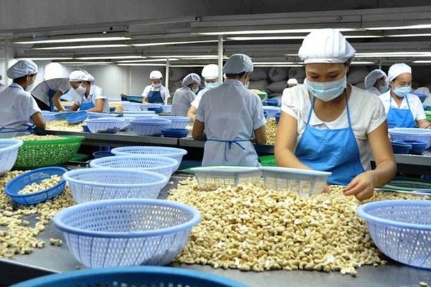 Acuerdan Vietnam e India cooperacion para comercializacion de anacardo hinh anh 1
