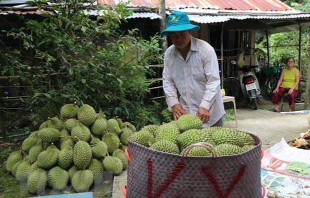 Preve Vietnam incrementar exportacion de frutas y hortalizas a China hinh anh 1