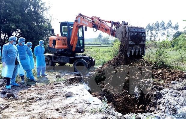 Se enfrasca provincia vietnamita de Quang Ninh en lucha contra peste porcina africana hinh anh 1