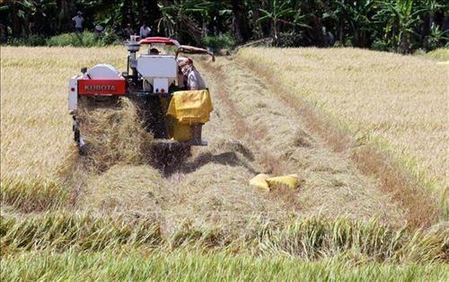 Impulsan en provincia vietnamita de Kien Giang proyectos en agricultura y desarrollo rural hinh anh 1