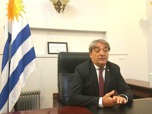 Ofrece Uruguay asistencia para abrir escuela de futbol en Vietnam hinh anh 1