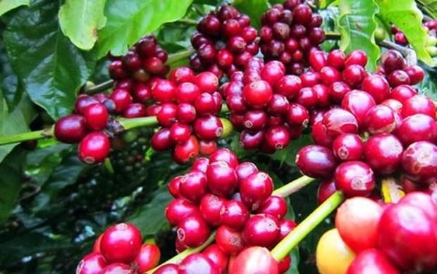 Presenta Vietnam productos en feria de cafe, culinaria y restaurantes en Singapur hinh anh 1