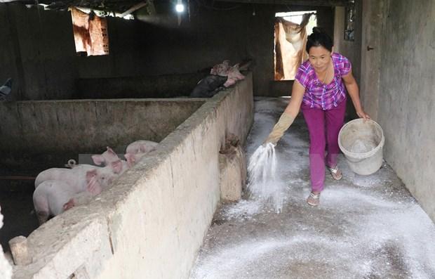 Recomienda FAO a Vietnam mantener alta la vigilancia contra la Peste Porcina Africana hinh anh 1