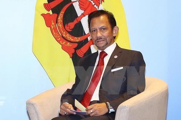 Buscan Vietnam y Brunei fortalecer cooperacion en todos los sectores hinh anh 1