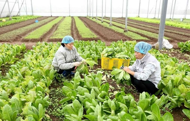 Planifica Vietnam llegar en 2020 a cinco mil millones de dolares en exportacion de frutas y verduras hinh anh 1