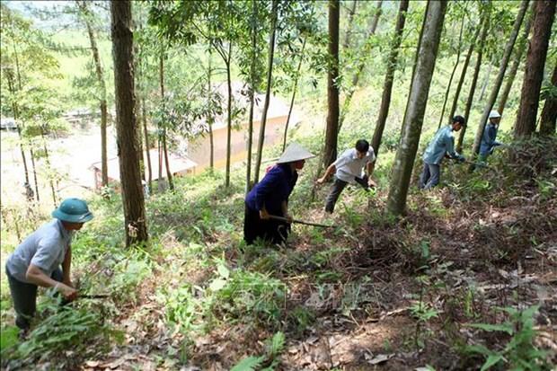 Provincia vietnamita de Kien Giang en alerta por posibles incendios forestales hinh anh 1