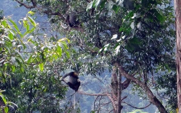 Liberan en Vietnam 88 animales salvajes en el Parque Nacional Chu Mom Ray hinh anh 1