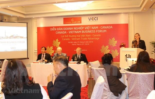 Busca ciudad vietnamita de Da Nang atraer mas inversiones de Canada hinh anh 1