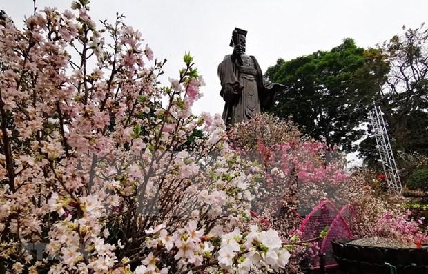 Celebran en Hanoi Festival de flor de cerezo Japon - Vietnam hinh anh 1