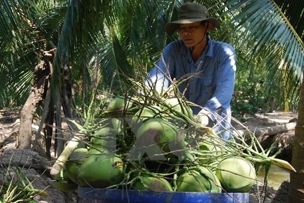 Registra provincia vietnamita de Ben Tre altos ingresos por exportaciones hinh anh 1