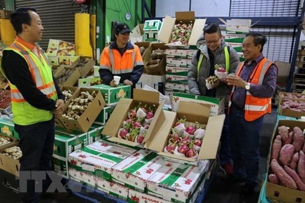Disminuyeron en Vietnam exportaciones de frutas y verduras en primer trimestre de 2019 hinh anh 1