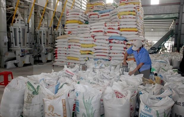 Registra Vietnam reduccion de ingresos por exportaciones de arroz hinh anh 1
