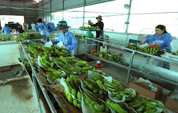 Impulsan cooperacion entre Vietnam y Paises Bajos en agricultura hinh anh 1