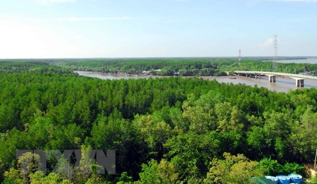 Respalda organizacion ecologista mundial conservacion de la biodiversidad forestal en Vietnam hinh anh 1