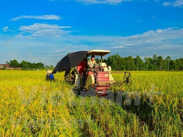 Promueven en Vietnam una agricultura adaptable al cambio climatico hinh anh 1