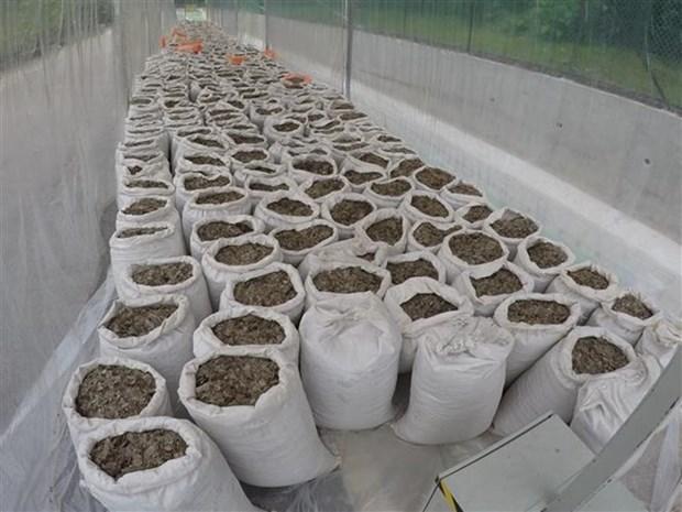 Incautan en Singapur casi 13 toneladas de escamas de pangolin hinh anh 1
