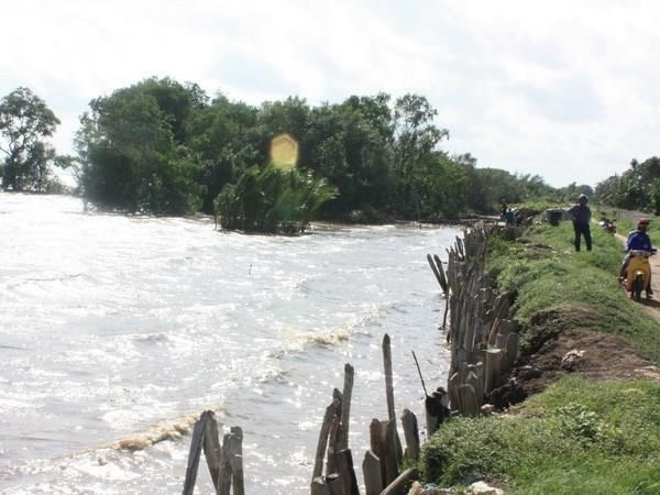 Aplican provincias en Delta del Mekong medidas contra el cambio climatico hinh anh 1