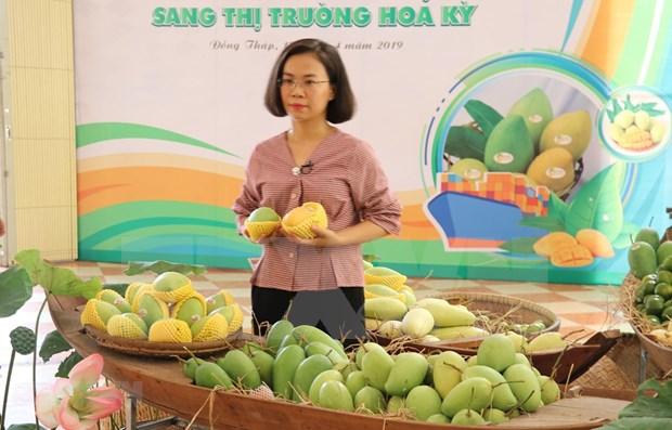 Exporta Vietnam primer lote de mangos a Estados Unidos hinh anh 1