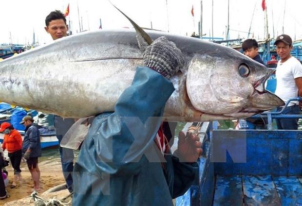 Se multiplicaron por ocho las exportaciones de atun vietnamita a China hinh anh 1