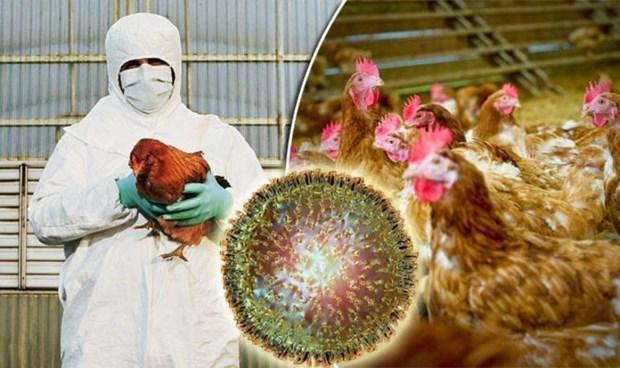 Camboya reporta primer brote de gripe aviar H5N6 hinh anh 1