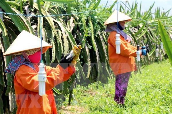 Vietnam carece de 3,2 millones de agricultores capacitados en 2020 hinh anh 1