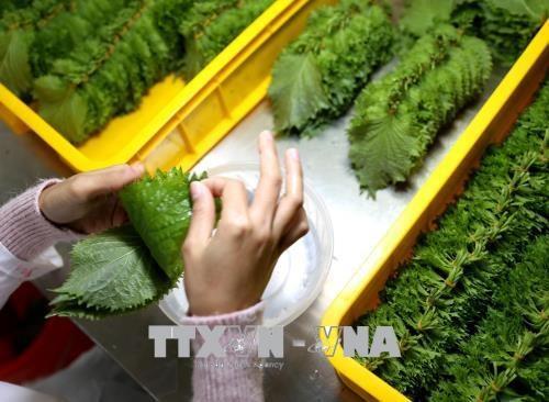 Recomiendan a turistas vietnamitas que no lleven alimentos frescos a Japon hinh anh 1