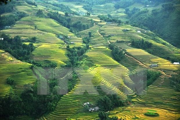Alrededor de 81 mil turistas visitaron Sapa durante recientes feriados en Vietnam hinh anh 1
