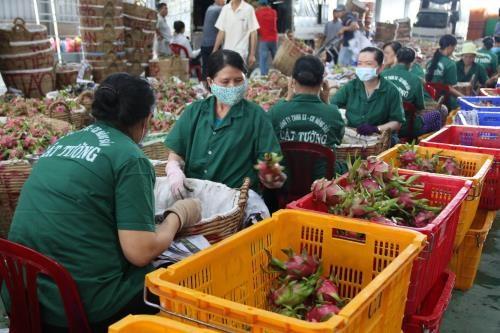 Disminuyen exportaciones agropecuarias vietnamitas en primer cuatrimestre de 2019 hinh anh 1