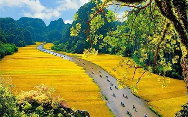 Dorados campos de arroz en la Semana de Turismo de Ninh Binh 2019 hinh anh 1