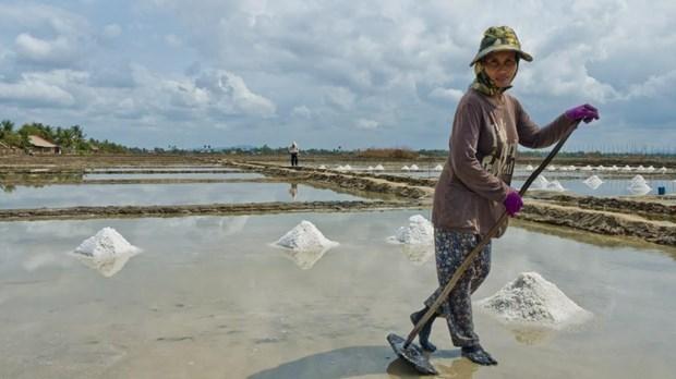 Camboya podria enfrentar escasez de sal este ano hinh anh 1