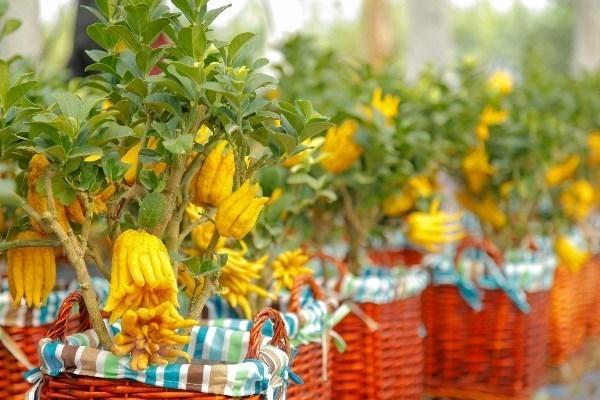 Vietnam posee gran potencial para la exportacion de plantas ornamentales hinh anh 1