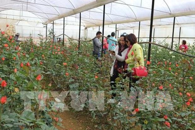 Aumenta llegada de turistas a ciudad altiplanica vietnamita de Da Lat hinh anh 1