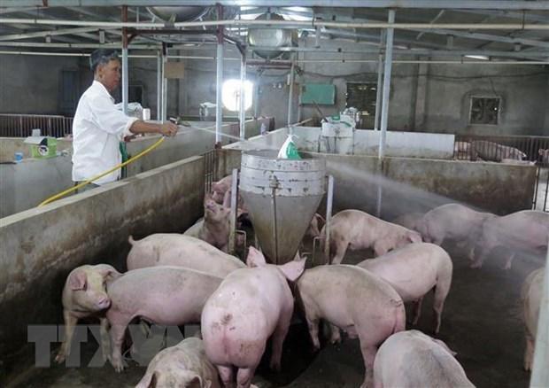 Asiste empresa vietnamita a Laos en gestion de informacion sobre ganaderia hinh anh 1