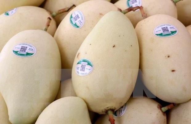 Aumenta Vietnam sus exportaciones de frutas y hortalizas hinh anh 1