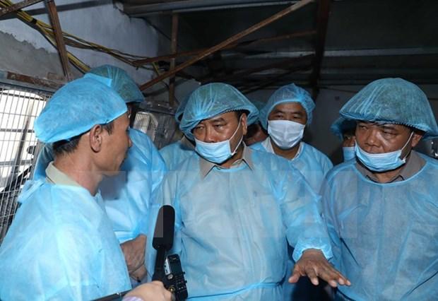 Pide premier a todo el sistema politico que se una al combate contra epidemia porcina hinh anh 1