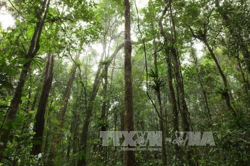 Busca Vietnam aumentar la cobertura boscosa en Altiplanicie Occidental hinh anh 1