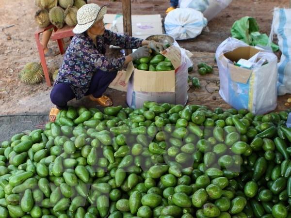 Promueve Vietnam exportacion de sus aguacates a Estados Unidos hinh anh 1
