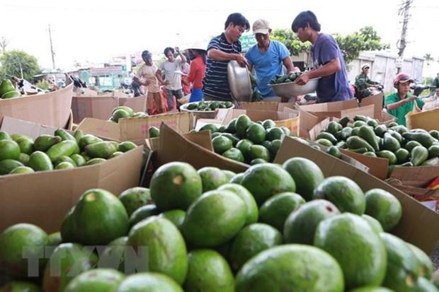 Instan en Vietnam a mejorar calidad de productos agricolas para aumentar sus exportaciones hinh anh 1
