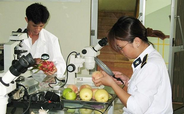 Amplia Vietnam la exportacion de frutas al mercado estadounidense hinh anh 1