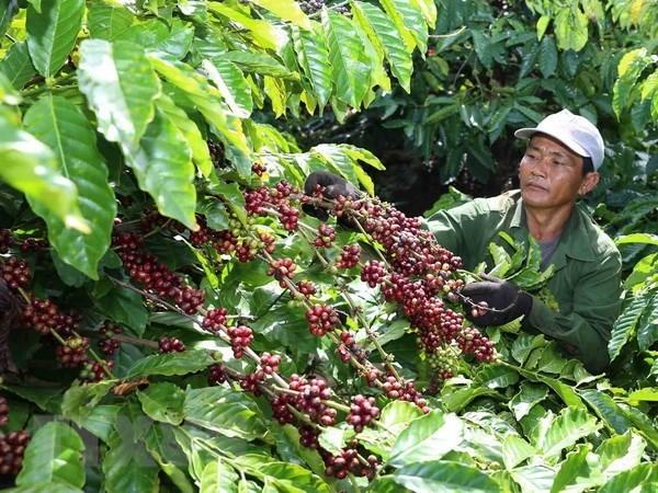 Apoya empresa alemana Bayer a Vietnam para desarrollar agricultura de alta tecnologia hinh anh 1