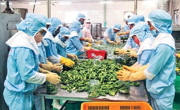 Vietnam ingresa 3,62 mil millones de dolares por ventas de productos agricolas en mayo hinh anh 1