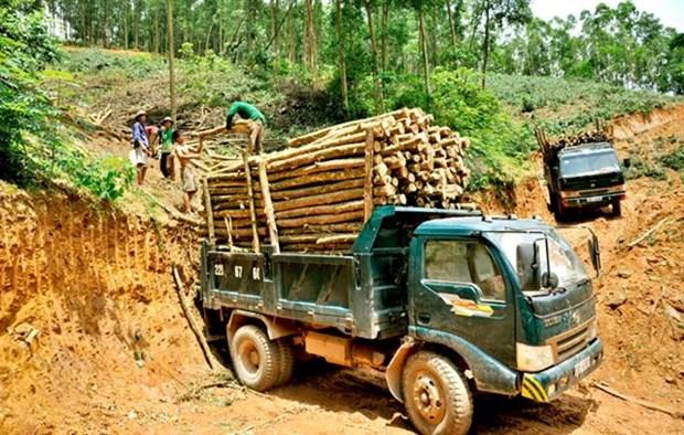 Establecera Vietnam regulaciones sobre productos madereros hinh anh 1