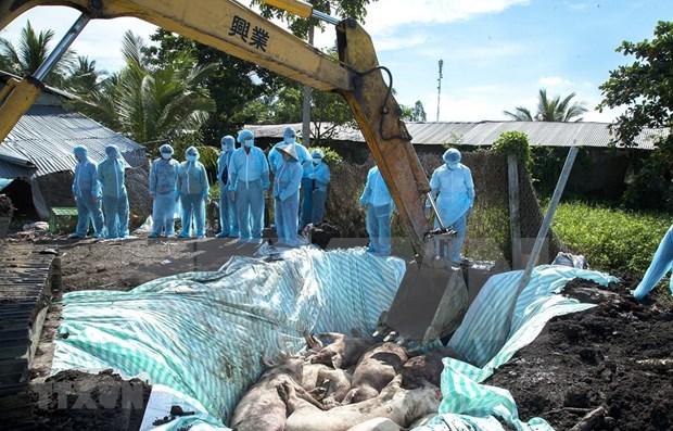 Orienta primer ministro de Vietnam medidas drasticas contra la peste porcina africana hinh anh 1