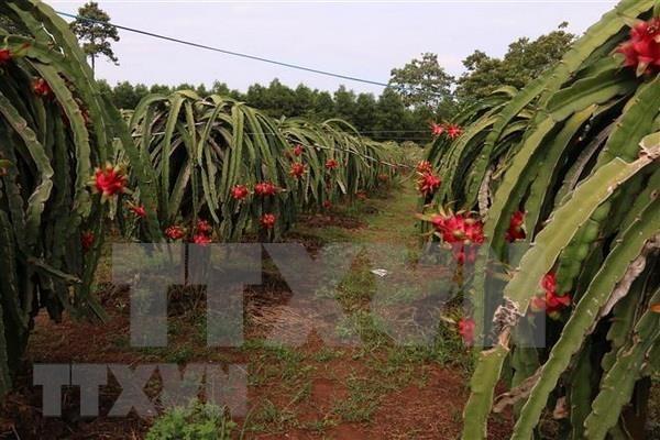 Provincia vietnamita trabaja por garantizar agua para el riego en la estacion seca hinh anh 1
