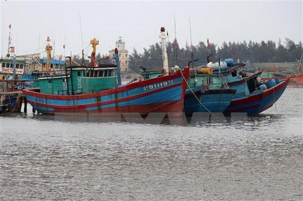 """Pescadores de Vietnam se unen contra la """"tarjeta amarilla"""" de Union Europea hinh anh 1"""